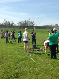 College aged volunteers in New Orleans for spring break plant trees at 5000 Warrington Drive in Gentilly