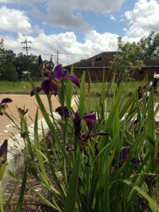 A relic flooded home can be seen from Levees.org's Memorial Iris Garden. Photo/Sandy Rosenthal